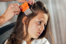 When a child has head lice, their scalp will be itchy.